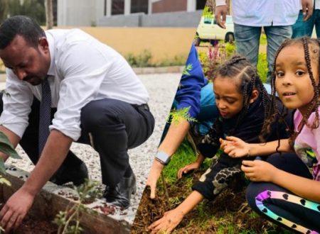 L'Etiopia potrebbe aver stabilito un record mondiale piantando 350 milioni di alberi in sole 12 ore